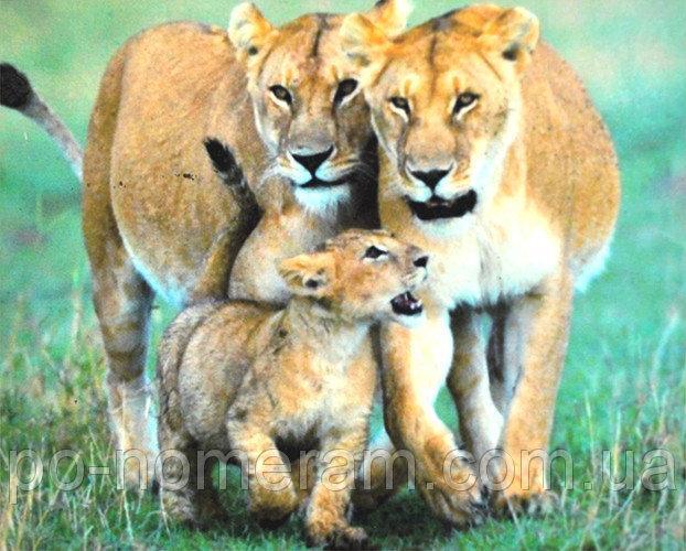 Семейка львов